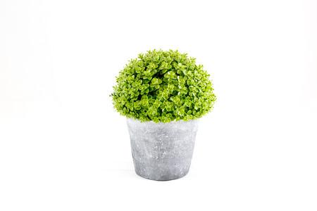 分離の白い背景を持つセメント鉢に成長している小さな緑の装飾的な木