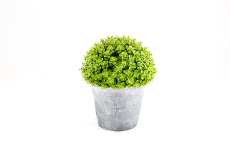 Small green decorative tree growing in a cement pots with isolated white background