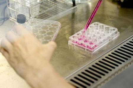 Clean Bench voor celkweek experimenten in het kankeronderzoek Stockfoto