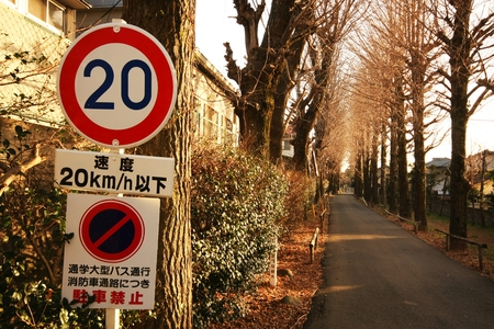 Speed Limitation 25 sign on the loacal road with tree in autumn season