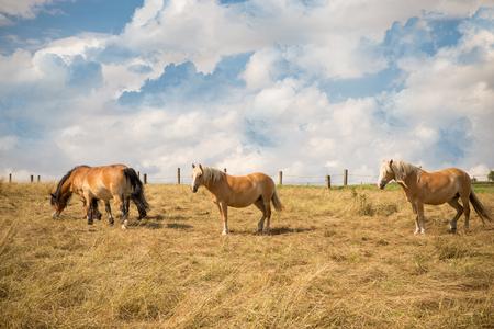 Horses background. Stock Photo