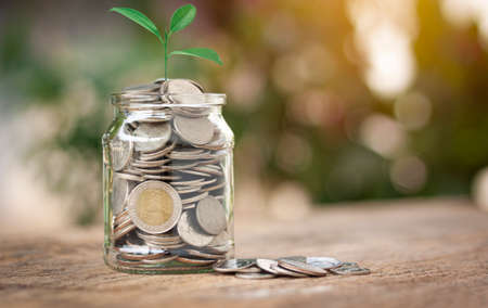 Plant is growing in a jar with coins.Showing the idea of ​​collecting small items for make money in the future. Save Money concept for Financial, Investment and Business.