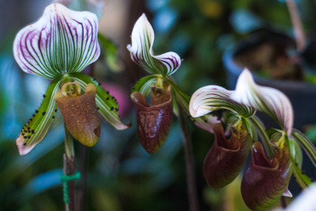 orchideae: Bueatiful orchid
