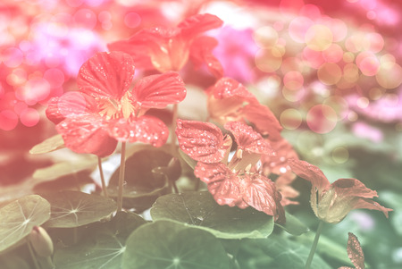 colorize: abstract red flower background, bokeh , flowers made with color filters