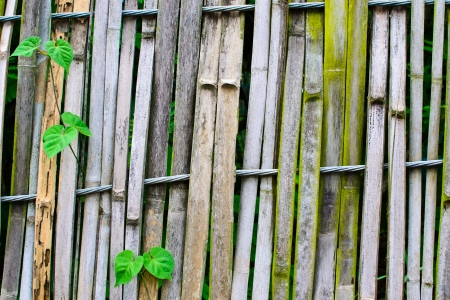 slings: Old bamboo fence Slings with green leaves Stock Photo