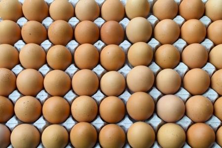 ovarios: Huevos de gallina de color marr?n en los ovarios de papel