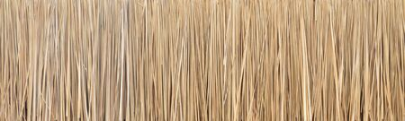 Panorama of Blady grass texture background ,Imperata cylindrica texture background Stockfoto