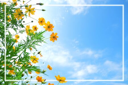 Beautiful yellow flowers on sky background with white frame, free space for text.