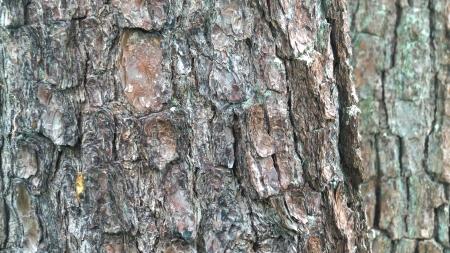 bark background texture photo