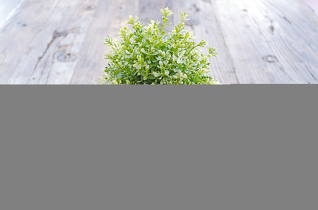 placed: pot of ornamental plants placed on wooden planks Stock Photo