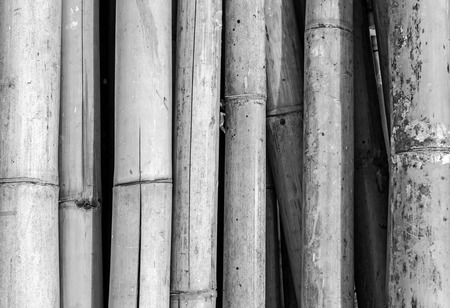 japanese background: Bamboo wall, black and white