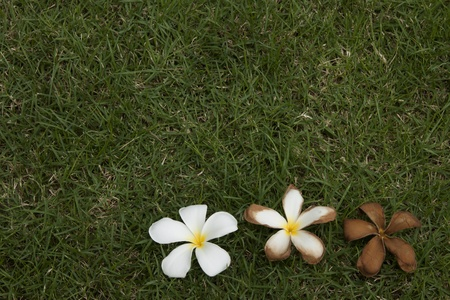 according: Flowers that vary according to time. Placed on the lawn.