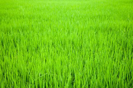 grass green field Stock Photo