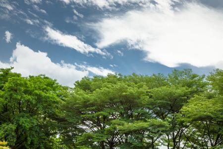 blu sky: forest blu sky Stock Photo