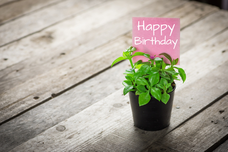 simple background: writing happy birthday on card and ornamental plants in pots on wooden floor.