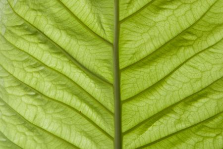 Texture of a green leaf as background Stock Photo - 8005198