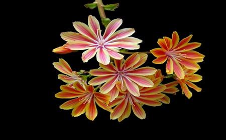 bloem Stockfoto