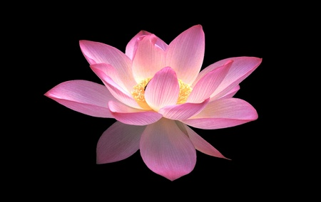 untroubled: Lotus Flower Stock Photo