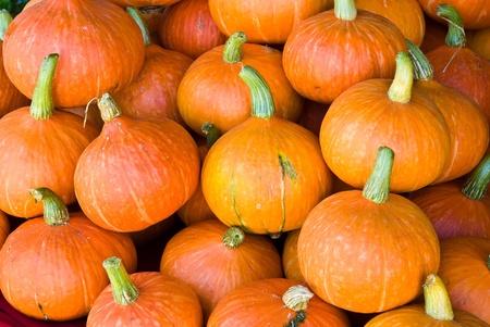 orange pumpkins  on the market photo