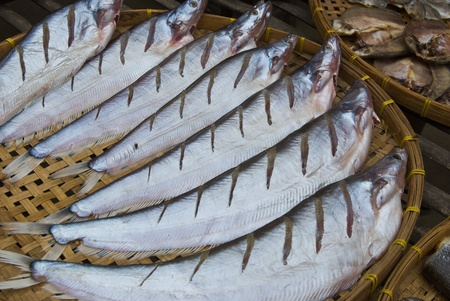 sheatfish: Sheatfish seco, en un c�rculo sobre placa de bamb�, Siluridae