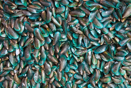 Fresh mussels at the market in Thaillnd photo