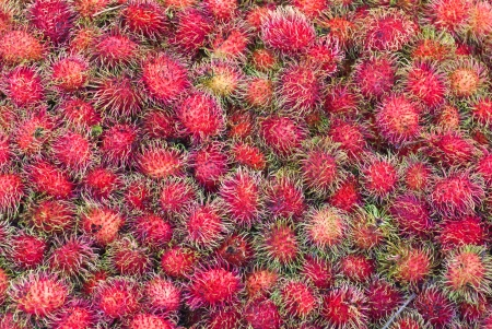 Fresh Rrambutan fruit at market in Thailand photo