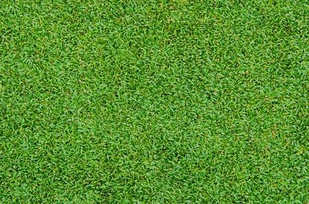 praterie: Modello di erba verde bella dal golf