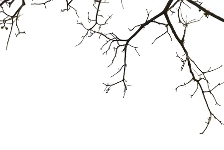 tree branches isolated on white background Stock Photo - 10424694