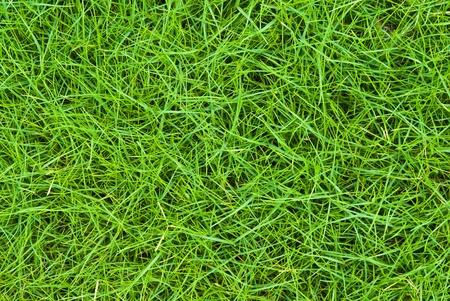 Beautiful green grass pattern from golf course