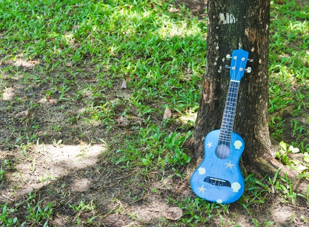 acoustic ukulele: hawaiian traditional instrument ukulele guitar in garden Stock Photo