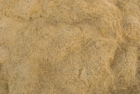 Dry lawn grass as a natural background photo