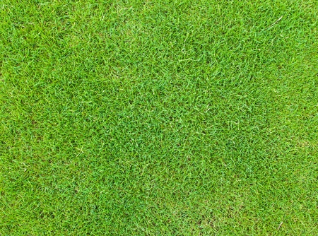 Beautiful green grass pattern from golf course Stock Photo - 13083300