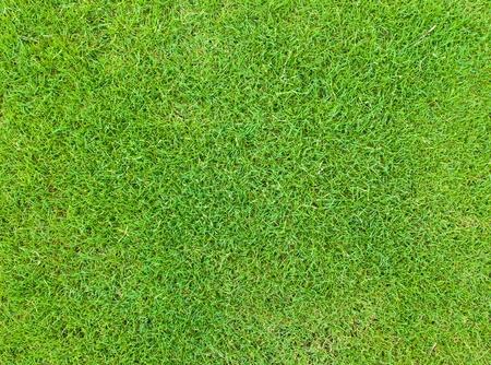 Bel modello di erba verde dal campo da golf Archivio Fotografico - 13083300
