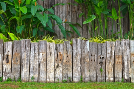 fence panel: old wooden fence in garden with plant