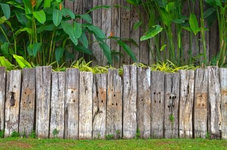 Vecchia recinzione in legno in giardino con piante Archivio Fotografico - 14212167