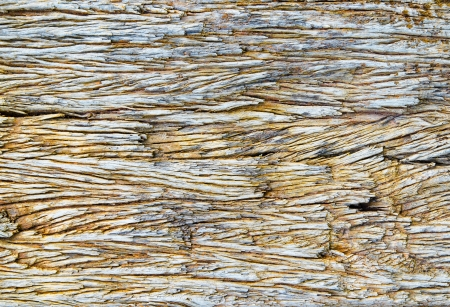 Close up  pattern of old wood surface photo