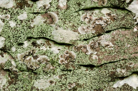 detail of Seamless old stone texture background close up in nature Stock Photo - 14732742