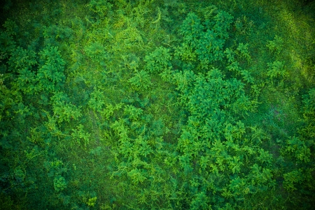 top view of a green grass pattern photo