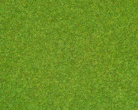 Beautiful green grass pattern from golf course photo