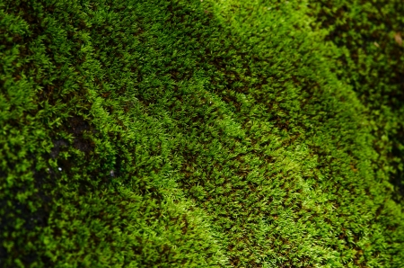 closeup old Stone Overgrown with Green Moss in forest Stock fotó