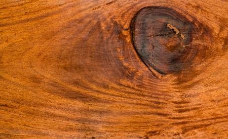 leguminosae: Old Iron wood background, XXylia xylocarpa Taub, LEGUMINOSAE