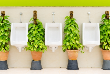 The modern style decorative restroom interior design with white urinal row and green ornamental plants photo