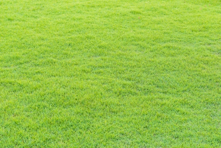 close up of beautiful green grass pattern from golf course at sunset time photo