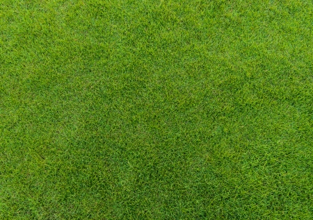 close up of beautiful green grass pattern from golf course at sunset time