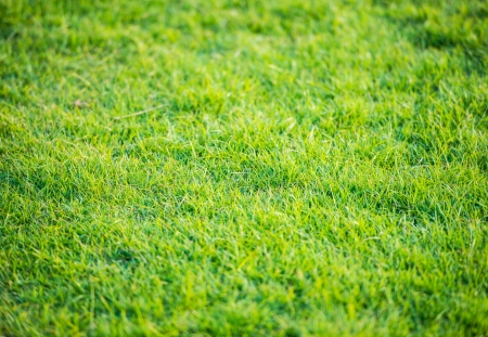 close up of beautiful green grass pattern from golf course at sunset time Stock Photo - 24681440