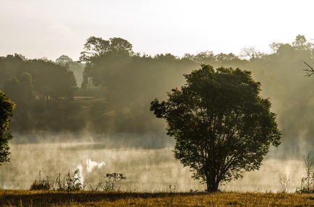 Vintage view of tree side the lagoon in morning mist at Khao Yai National Park,Thailand photo