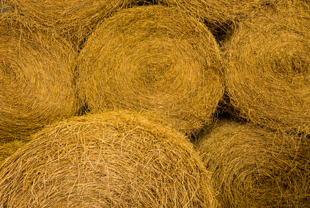 Yellow rolls of straw in a background photo