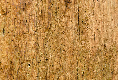 deteriorated: the tree side view of old wood texture in forest. Can be used as background