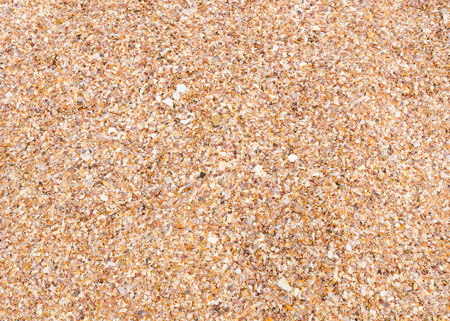 shell pattern: close up beautiful background and texture of nature sea shell pattern on a sand beach in the summer