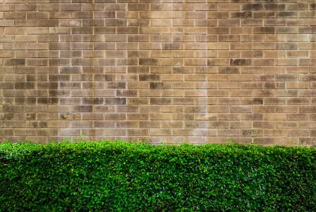 parapet wall: background and texture of vintage style decorative brown brick wall with Singapore Holly tree or Miniature Holly tree